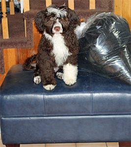 Syn sits on top of an ottoman. There is a large stuffed bag next to her.