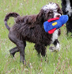 Syn carries a blue and red stuffed toy. She is walking in grass.
